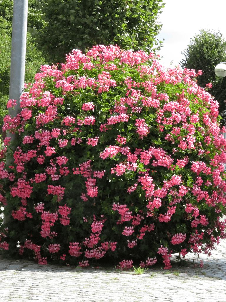 kugel rosa 2