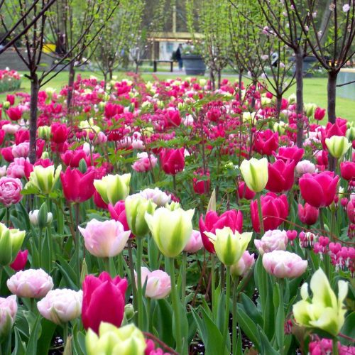Frühlingsmix 6