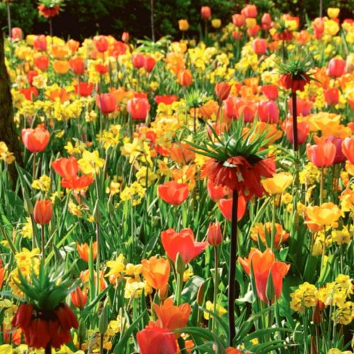 Frühlingsmix 2