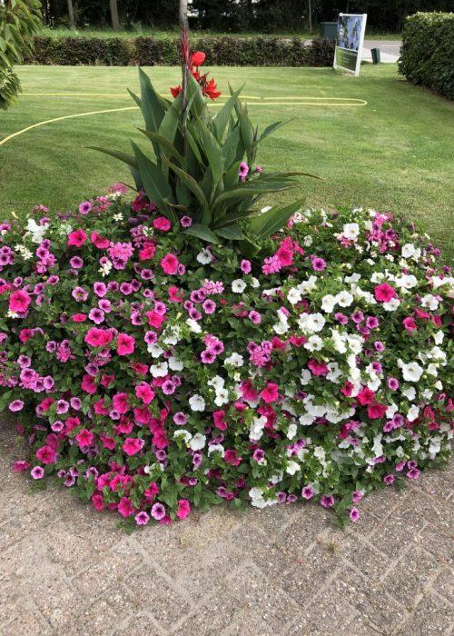 Blumenkästen Typ Zandvoort 150x55cm mit Sommerbepflanzung