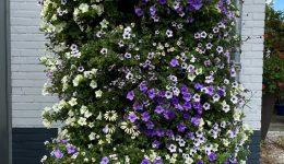 Zuil Blauw Wit